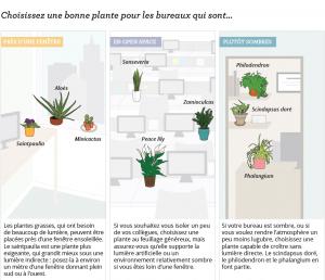 Choisir ses plantes pour augmenter la productivité et le bien-être au travail